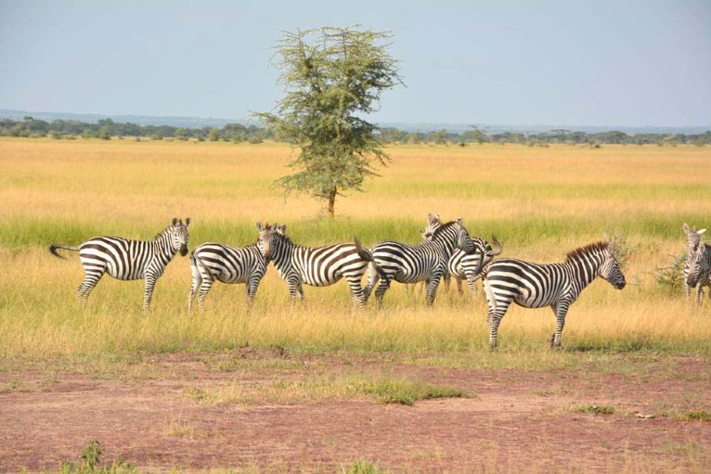 serengeti national park- one of the best national parks in Africa