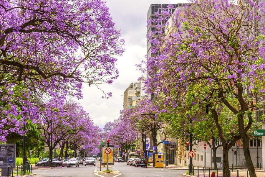 Spring Travel Lisbon