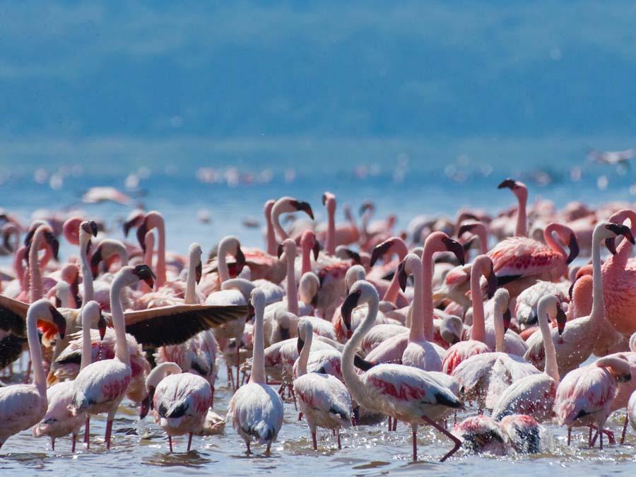 Lake Nakuru is one of the famous landmarks in Africa