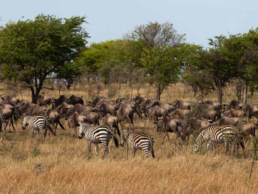 Masai Mara National Park is one of the famous landmarks in Africa