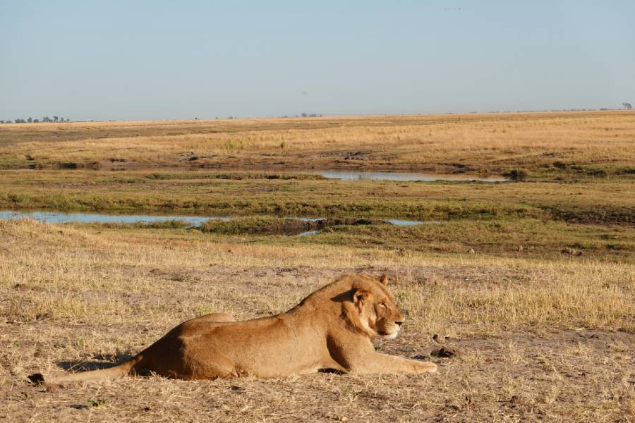 safari tips for first timers