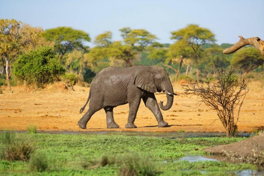 africa myths (