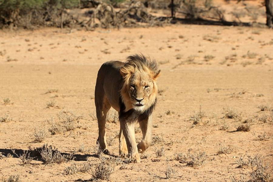 Central Kalahari Game Reserve is one of the best national parks for a Botswana safari