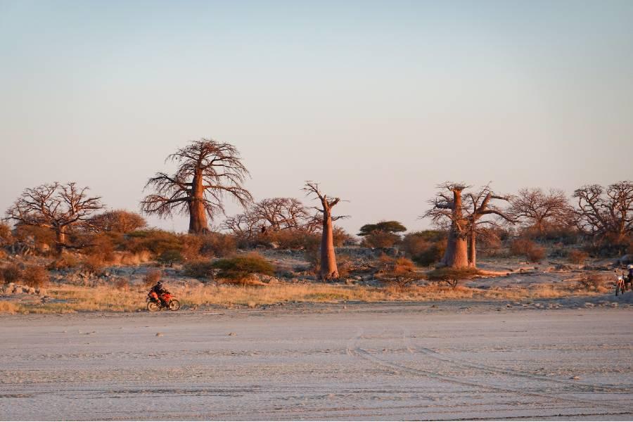 Makgadikgadi Pans National Park offers some of the best wilderness safaris Botswana
