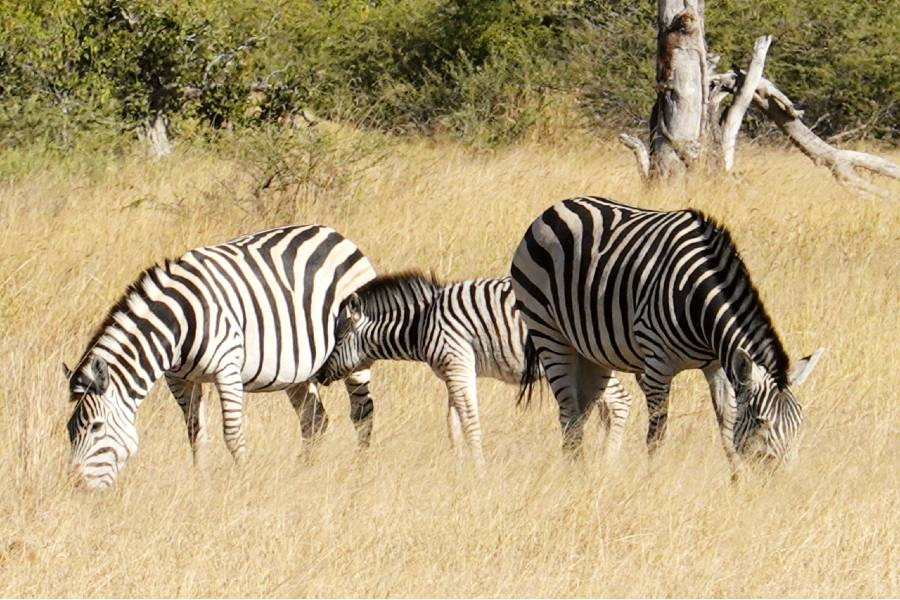 Molokodi Nature Reserve is one of the best national parks in Botwana