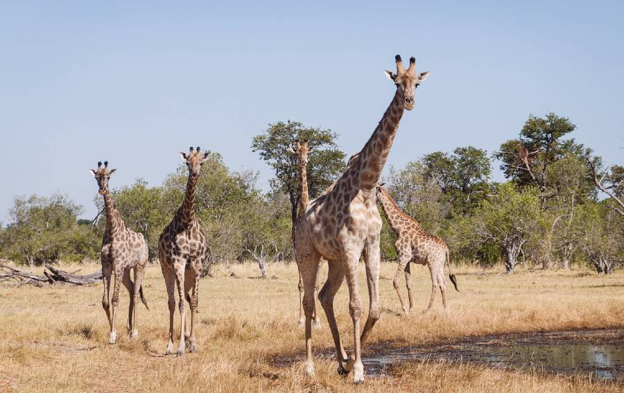 Moremi Game Reserve is one of the best botswana national parks