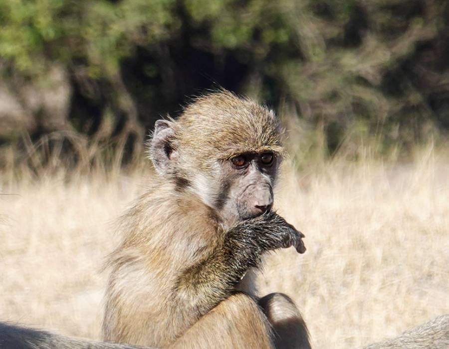 national parks of botswana