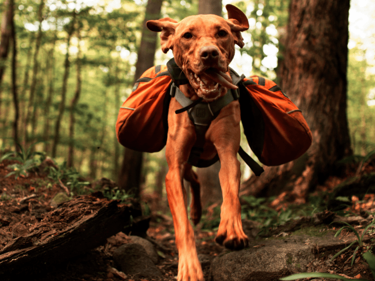18 Best Camping Gear For Dogs To Pack For The Outdoors