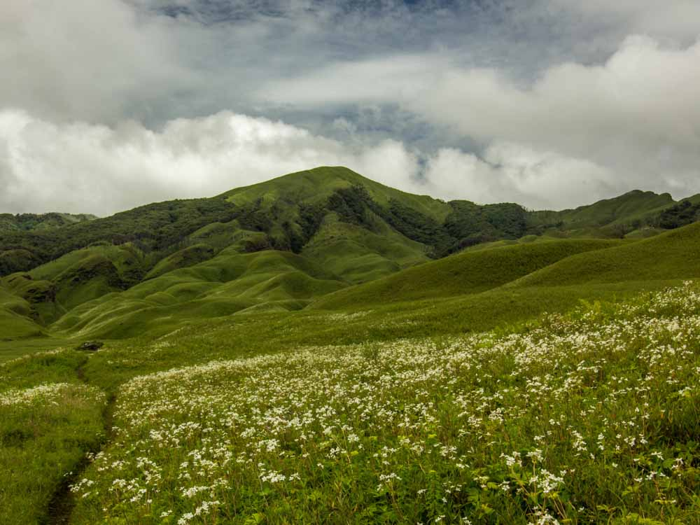Dzuko Valley is one of the landmarks of India