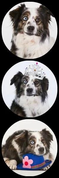 adopting a dog adoption