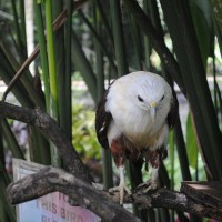 FotoFolio: Philippine Eagle Center, Davao (eagles, and more!)