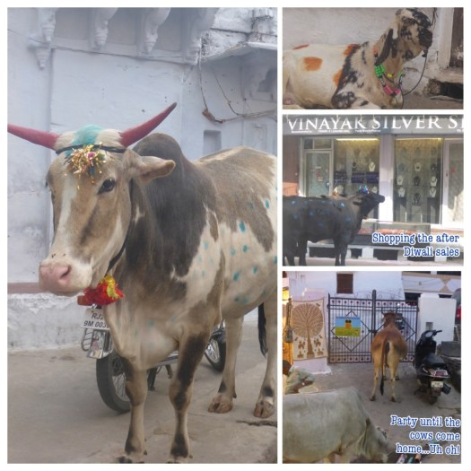 Party Cows in India - Dawali