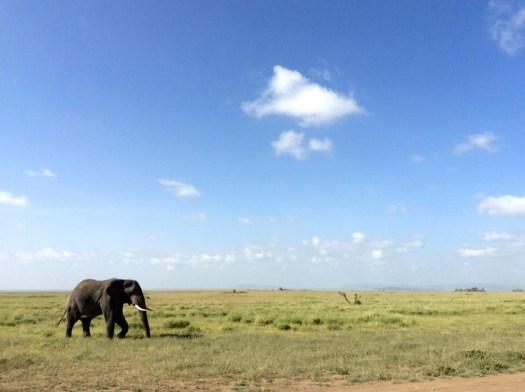 Elephant Serengeti National Park, Tanzania