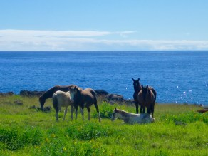 Wild Horses of Easter Island