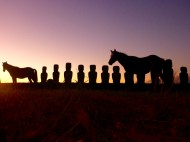 Wild Horses with Rapa Nui Moai on Easter Island at Sunset