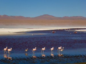 Flamingos Laguna Colorada
