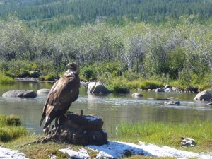 Eagle Hunting in Western Mongolia