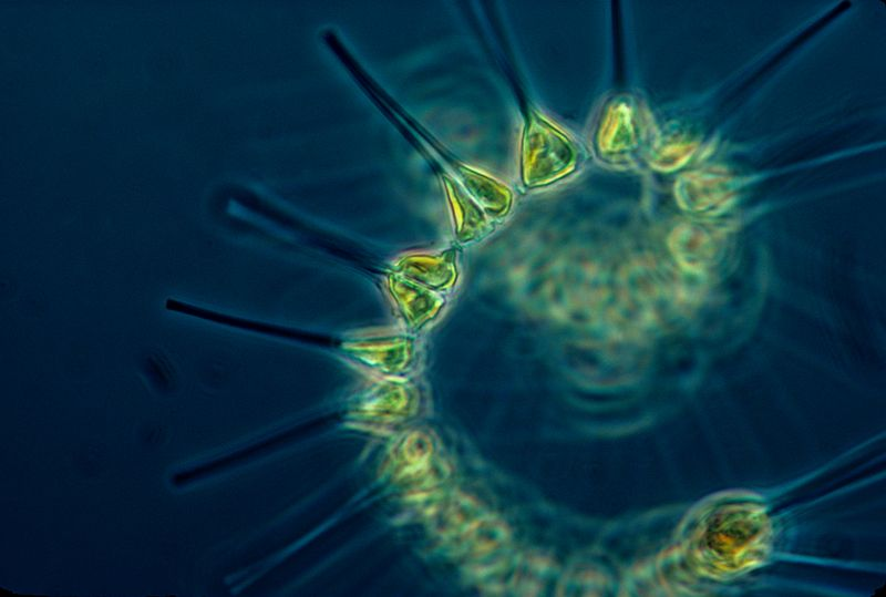 Phytoplankton similar to what was found on the surface of the ISS