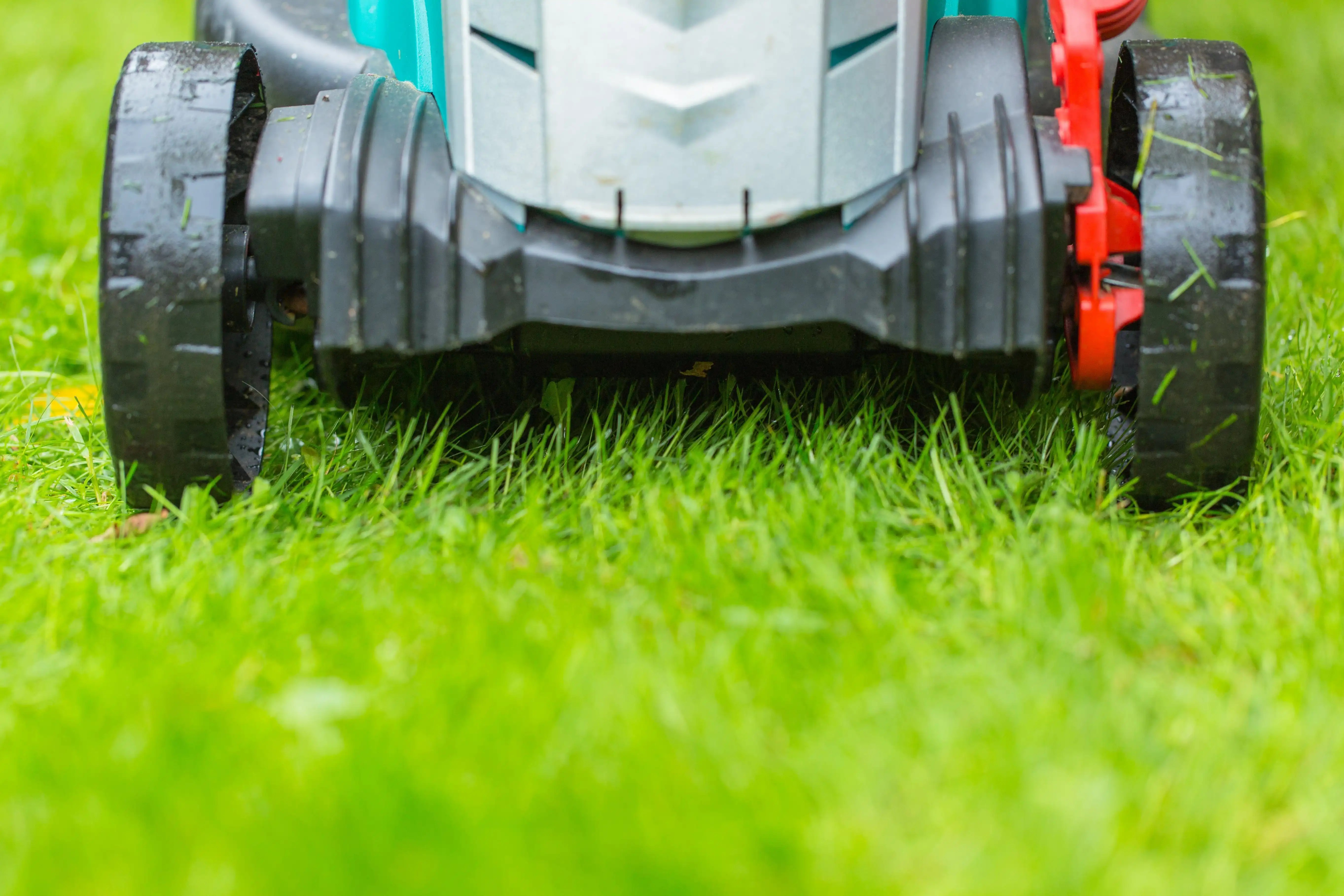 cutting grass in morning with electric lawn mower