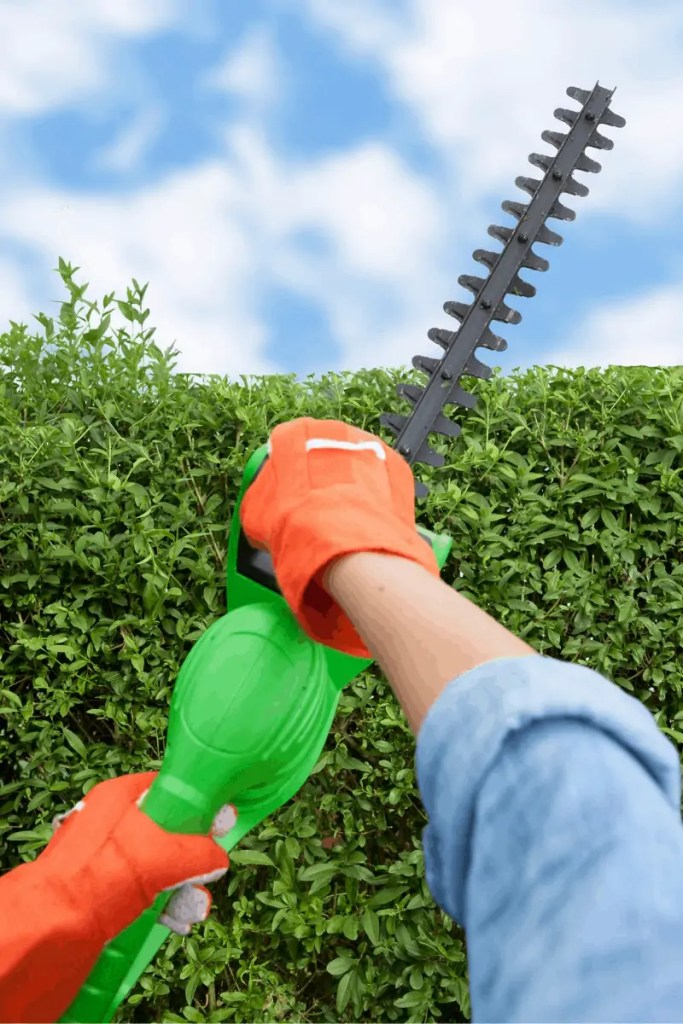 Trimming the hedges with electric trimmer