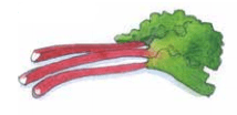 Illustration of Rhubarb by Carrie Hill for The Allotment Kitchen by Susan Williamson