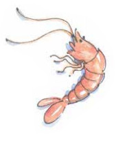 Prawn with shell on illustration for The Allotment Kitchen by Susan Williamson illustrated by Carrie Hill