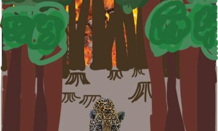 Amazon ablaze: what is to blame?