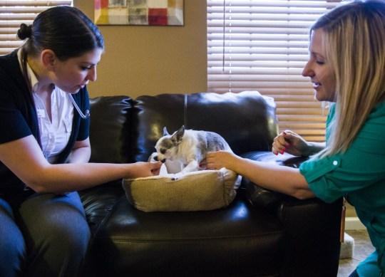Pet hospice3
