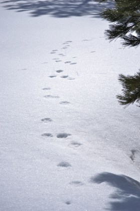 Who's footprints are they?