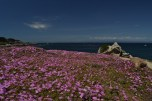 Lover Point, Monterey Bay