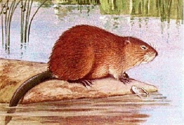 You need to know about the nutria.