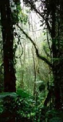 The Monteverde Costa Rica Cloud Forest.
