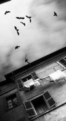 Black Birds, White Laundry, photo by Grant Hamilton.