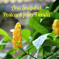 Ana Snapshot : Postcard from Florida