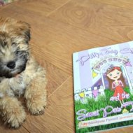 Phillipa Fairy Cake and the Secret Pets Tea Party