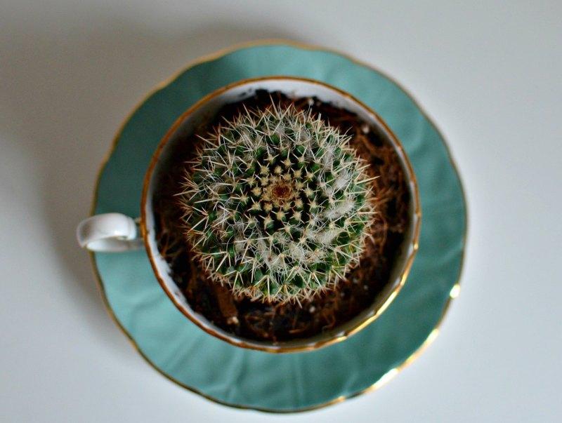 D cactus