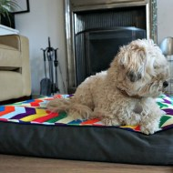 Finishing Touches : A very cool dog bed