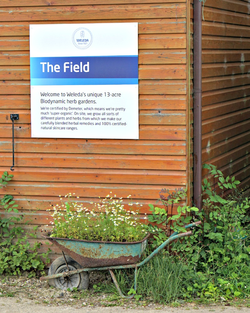 Weleda -The Field off heanor road - biodynamic herb garden 13 acreas. Image of the sign, with a barrow underneath