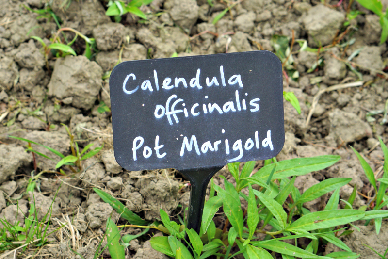 Weleda insight day pot marigold sign