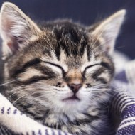 Seven Things You Need in Preparation for a New Kitten