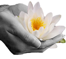 Hands-Lotus