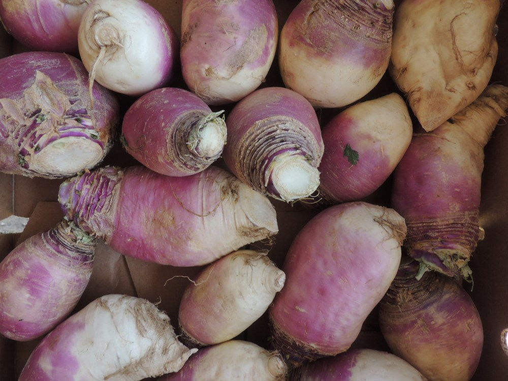 Turnips at the BUG farm stand