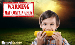 Stop Poisoning Your Children with GMOs!