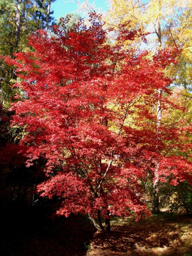Autumn Savoring (1/6)