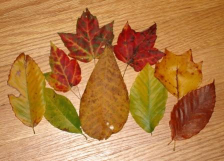Autumn Savoring (5/6)