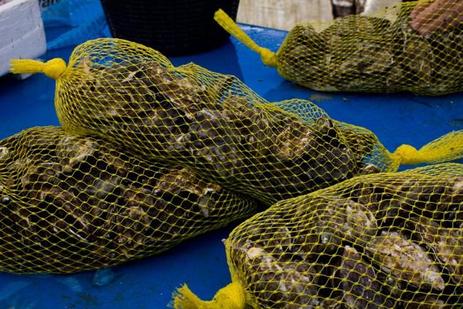 oysterfest-2106-2