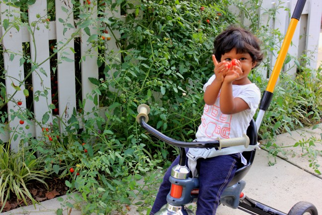 Asha on tricycle eating tomatoes