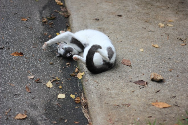 cat stretching on the sidewalk