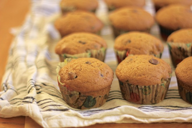 Chocolate Chip and Pumpkin cupcakes