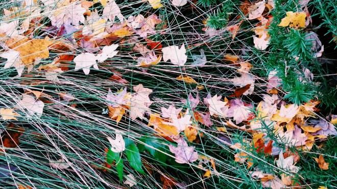 Fall in Historic Oakwood, Raleigh 2015